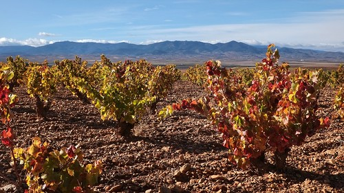 Longares vineyard.