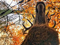 Un-deer.