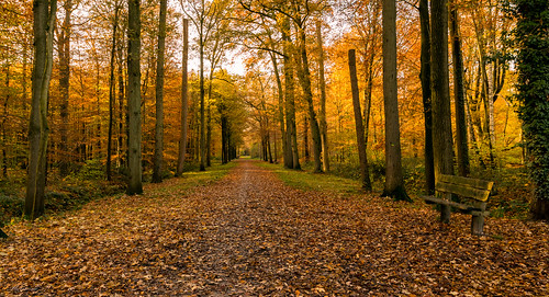 Invitation for an autumn walk
