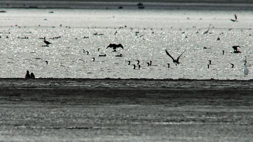 19774.Vogelbeobachtung im Gegenlicht