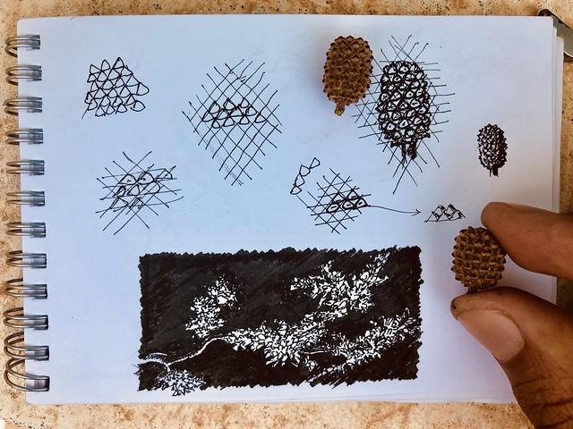 Study of pine kernels