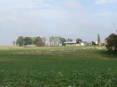 Ovillers-la-Boisselle: Ferme de Mouquet (Somme)