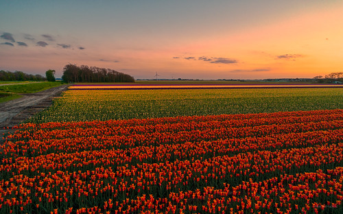 Colours of Holland.