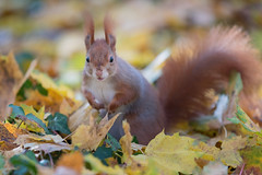 A rustling noise in the leaves