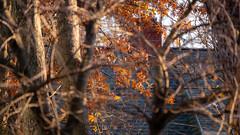 Back Yard Autumn Vibes