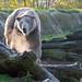20191124 Blijdorp Zoo
