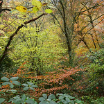 Autumn Woodland Colours by Nina Harrup