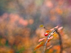 Fruit Garden Bokeh | 24. November 2019 | Tarbek - Schleswig-Holstein - Deutschland