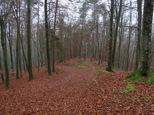 near Trdkova (Slovenia)