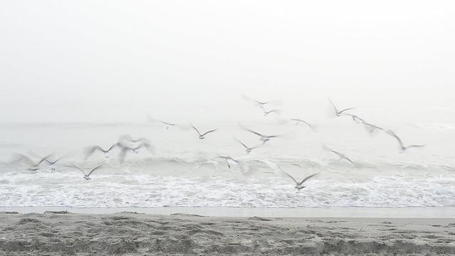 L'envol dans la brume