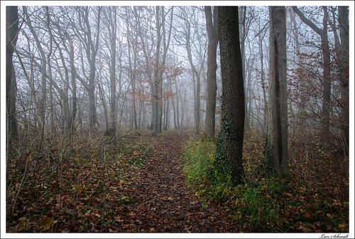 Im Nebelwald 1