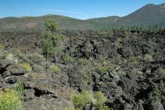 Robinson Mountain & O'Leary Peak & Bonito Lava Flow (San Francisco Volcanic Field, Arizona, USA)