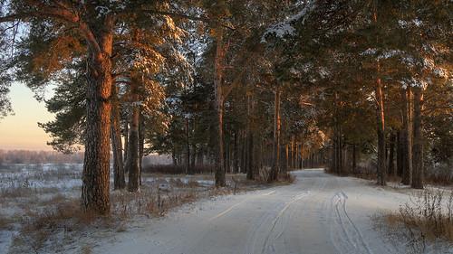 new born winter