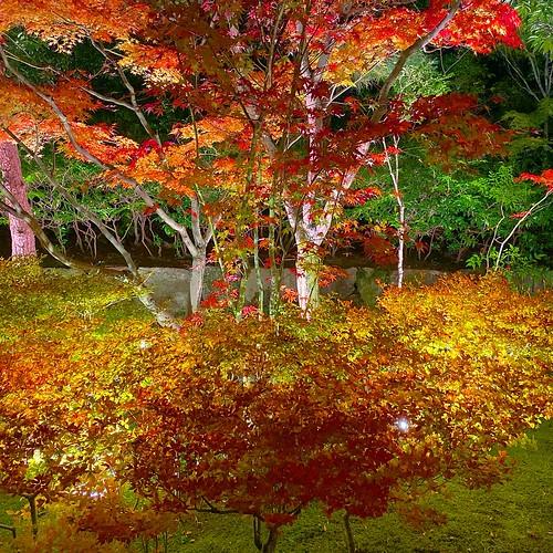 白鳥庭園 Shirotori Garden