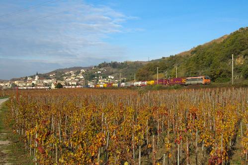 Combiné Belge dans les vignes