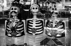 Three Skelly Tequila Bottles in a Liquor Store Window