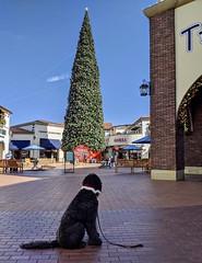 Benni and the Christmas Tree