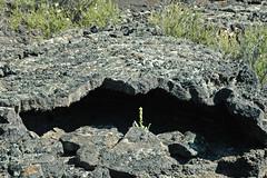 Lava tube (Bonito Lava Flow, upper Holocene, erupted from Sunset Crater; San Francisco Volcanic Field, Arizona, USA) 1