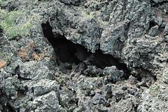 Lava tube (Bonito Lava Flow, upper Holocene, erupted from Sunset Crater; San Francisco Volcanic Field, Arizona, USA) 2