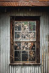 Window and Vines – Good Hope, Georgia