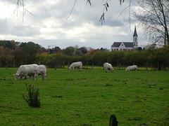 Bouvines- Eglise St Pierre  vue de Gruson, Lille, Hauts-de-France