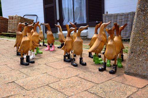 Escape of the Ducks