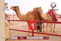 الصور .. منافسات مهرجان قطر الخامس عشر للأصايل (شوط تلاد الجمل 20 مفتوح) مساء  27 -11-2019