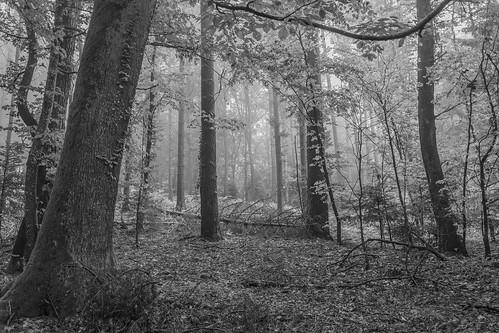 Forêt du Jolimont, Seeland