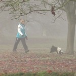 Misty Autumn Walk With The Dog by Sue Ould