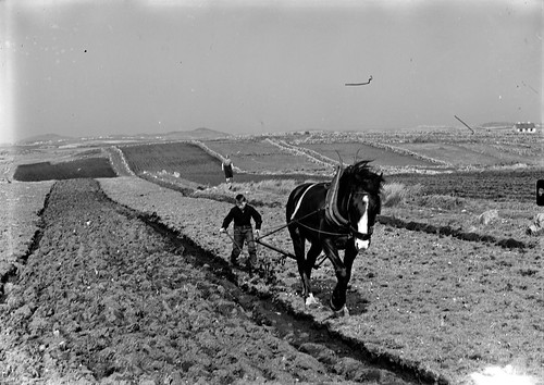 Ploughing the rocks of bawn