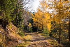 Autumn in Krkonose