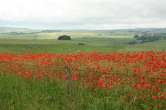 View to Avebury village with poppies June 2016 credit Ridgeway Partnership