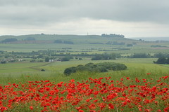 View to Cherhill with poppies June 2016 credit Ridgeway Partnership