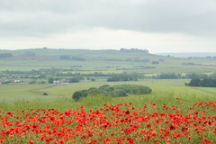 View to Cherhill with poppies June 2016 2 credit Ridgeway Partnership