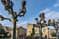 43224-Saint-Emilion - Photo of Branne
