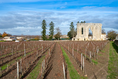 43335-Saint-Emilion - Photo of Branne