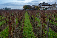 43212-Saint-Emilion - Photo of Branne