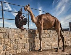 Cranky Camel