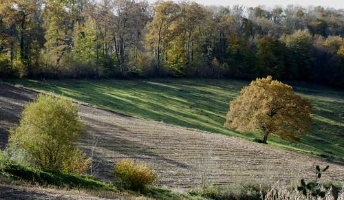 Un bel automne béarnais, route des Pindats, Bosdarros, Béarn, Pyrénées Atlantiques, Nouvelle-Aquitaine, France.