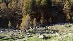 Corte di Mezzo im Valle Alpe de Ruscada