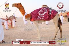 الصور .. منافسات مهرجان قطر الخامس عشر للأصايل (شوط النخبة الجمل 50 مفتوح) مساء  29 -11-2019