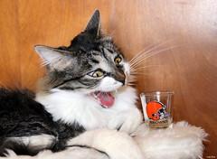"""OMG !!  Who drank my shot !! ??"""