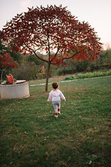 Little happy girl child going in the autumn park. Red tree and little girl.