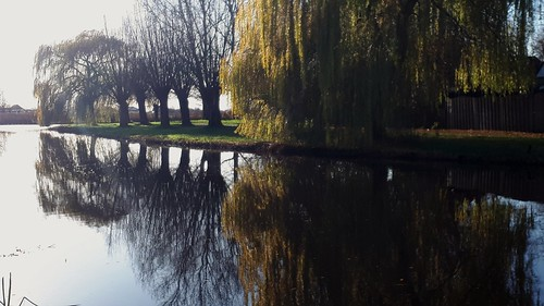 Reflections in the pond, Sneek