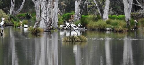 West Albury Wetland