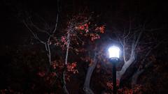 Illuminated Tree in Lafayette Park