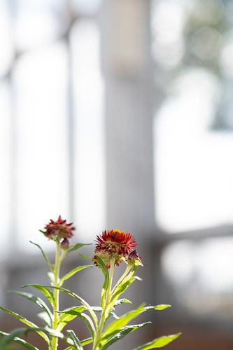 20191026 Floral Garden Yosami 3