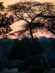 2019 Botswana,Near Kasane