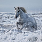 White Horse by Colin Brister