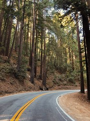 Entering the redwoods